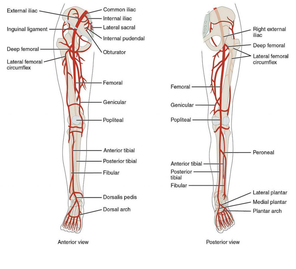 arterial duplex ultrasound